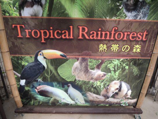 熱帯の森-min