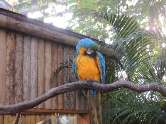 熱帯鳥-min