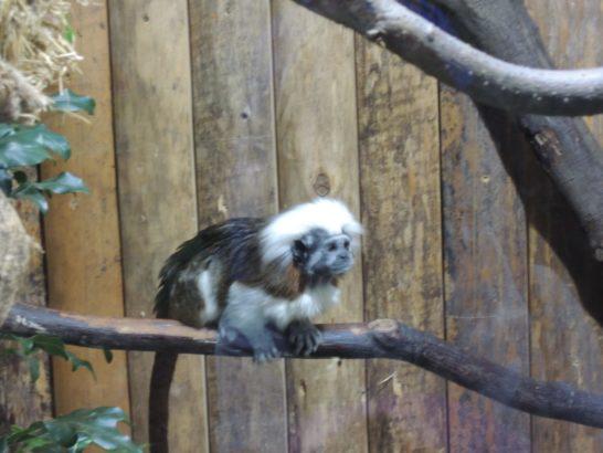 熱帯猿-min
