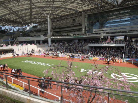 阪神競馬場パドック